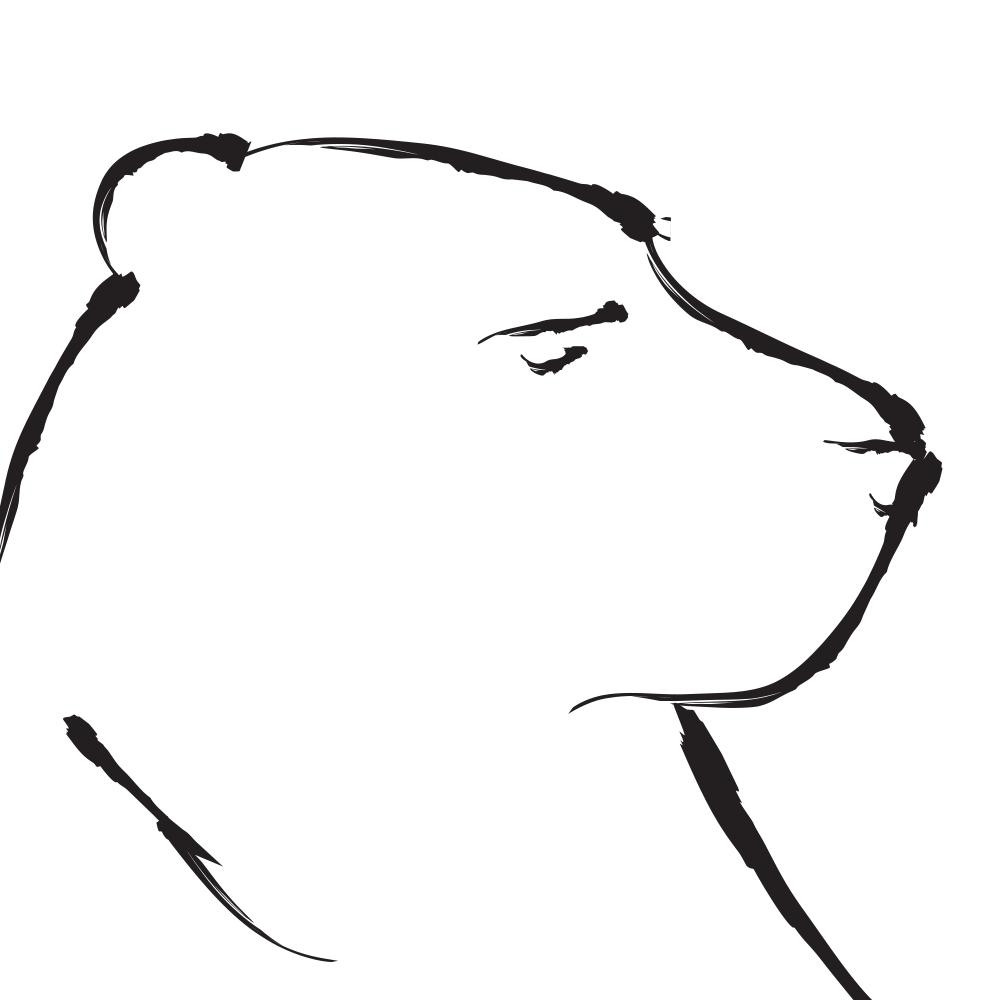 Inside A Bear